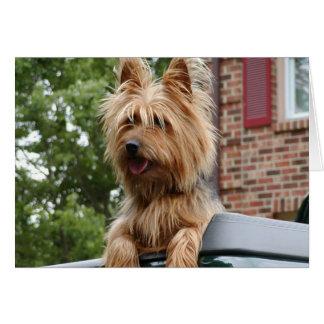 Australian Terrier Card