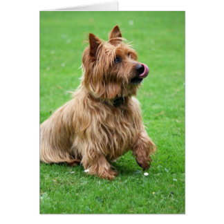 Australian Terrier dog blank greeting card