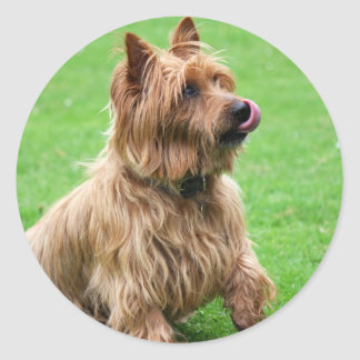 Australian Terrier dog stickers, present idea Classic Round Sticker