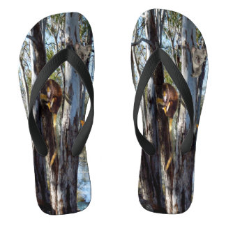 Australian Tree Kangaroo And Koala Bear, Flip Flops