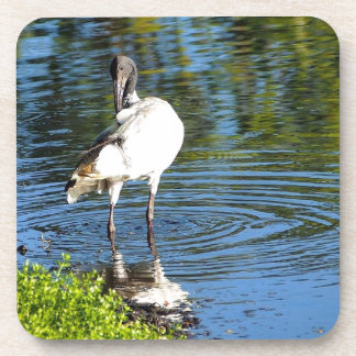 Australian White Ibis drink coaster set