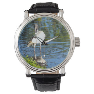 Australian White Ibis watch