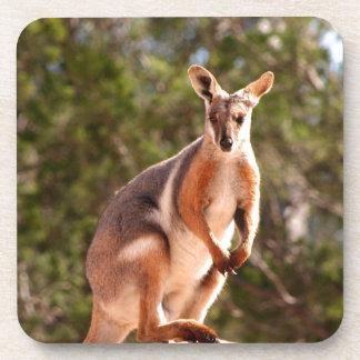 Australian yellow-footed rock wallaby coaster