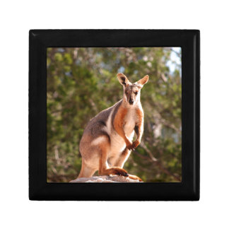 Australian yellow-footed rock wallaby gift box