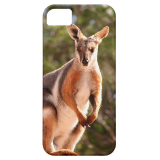 Australian yellow-footed rock wallaby iPhone 5 case