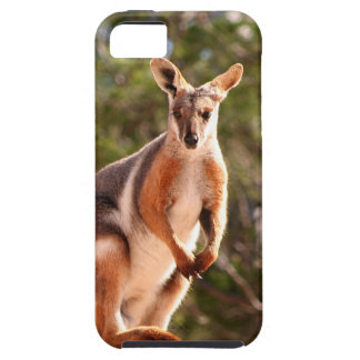 Australian yellow-footed rock wallaby iPhone 5 cover