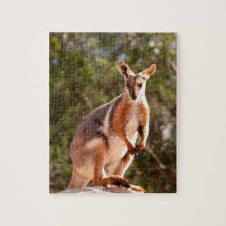 Australian yellow-footed rock wallaby jigsaw puzzle