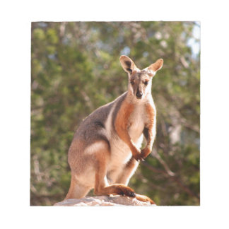 Australian yellow-footed rock wallaby notepad
