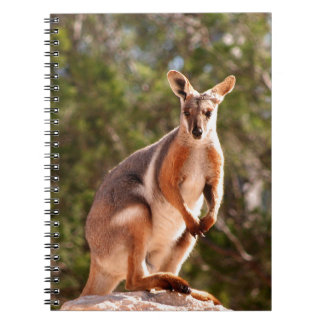 Australian yellow-footed rock wallaby spiral notebook