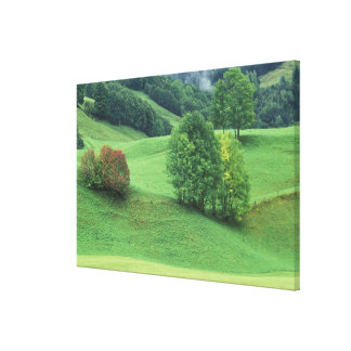 Austria. Rolling green hillside and trees Canvas Prints