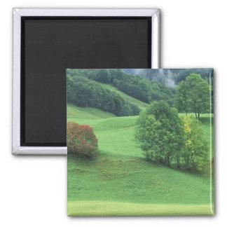 Austria. Rolling green hillside and trees Fridge Magnets