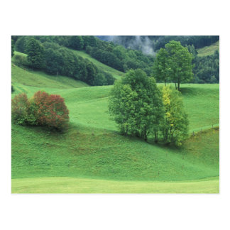 Austria. Rolling green hillside and trees Postcard