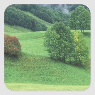 Austria. Rolling green hillside and trees Square Sticker