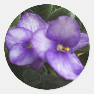 Autocollant de violettes africaines
