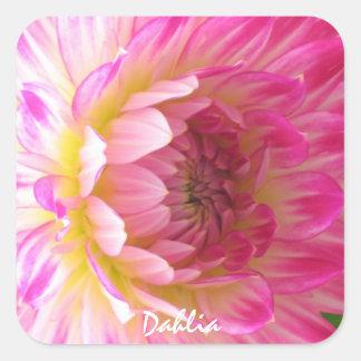 Autocollant rose de dahlia