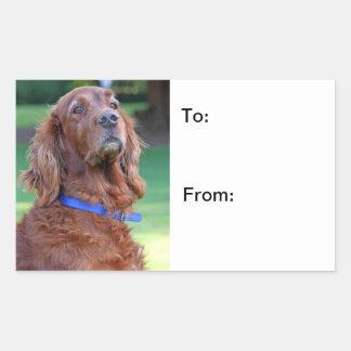 Autocollants de chien de photo de chien de poseur