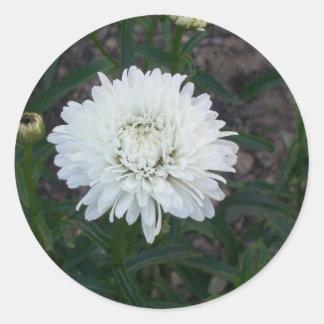 Autocollants de fleur blanche