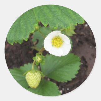 Autocollants de fraisier