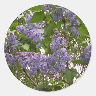 Autocollants de lilas