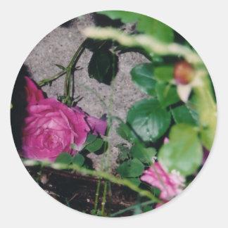 Autocollants de rose de rose