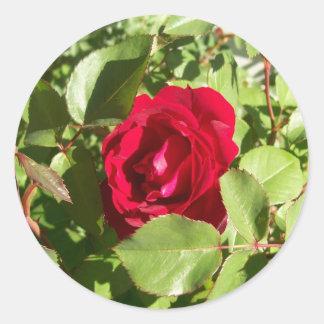 Autocollants de rose rouge