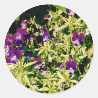 Autocollants de violettes