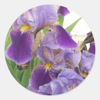 Autocollants pourpres d'iris
