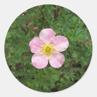 Autocollants roses de buis