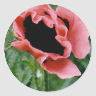 Autocollants roses de pavot