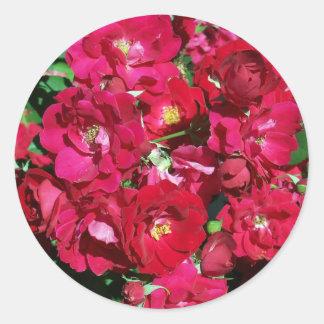 Autocollants rouges de rosier