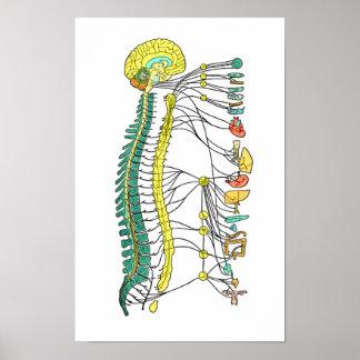 Autonomic Nervous System Poster