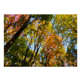 Autumn 2017 | Colorful Trees Poster