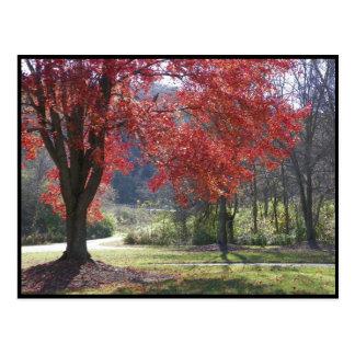 ~ Autumn ~ 30 Postcard