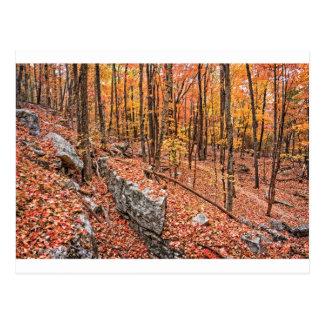 Autumn Above the Trail Postcard