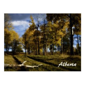 autumn afternoon, Alberta Postcard