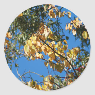 Autumn Afternoon Classic Round Sticker