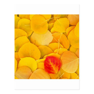 Autumn Aspen Leaves Eastern Sierra California Postcard