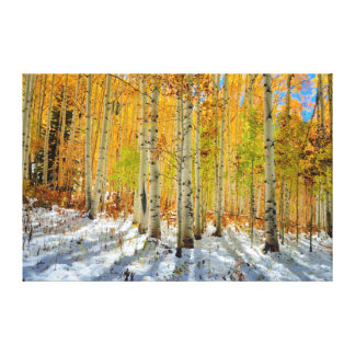 Autumn Aspens Canvas Print