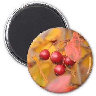 Autumn Berries magnet