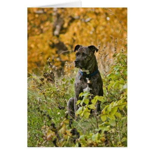 Autumn Bryn Card