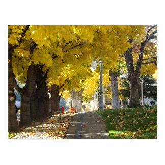 Autumn Canopy Postcard