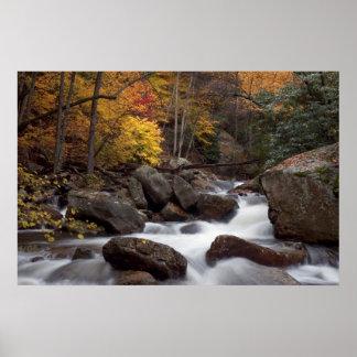 Autumn Cascade  Print