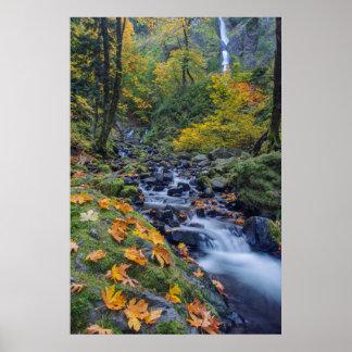 Autumn Color Along Starvation Creek Falls Poster