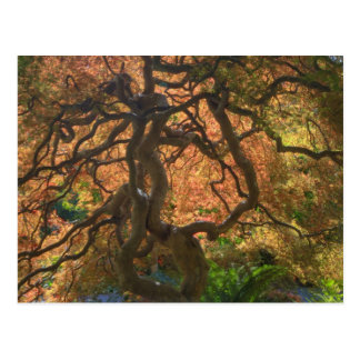 Autumn color Maple trees, Victoria, British 2 Postcard