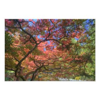 Autumn color Maple trees, Victoria, British 3 Photo