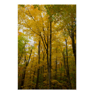 Autumn color, Michigan Poster