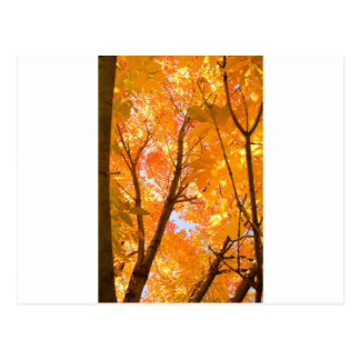 Autumn Color Mood Postcard