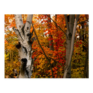 Autumn Colours, Northern Ontario Postcard
