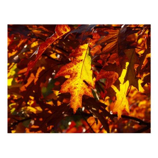 Autumn colours postcard