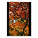 Autumn Contrast Card